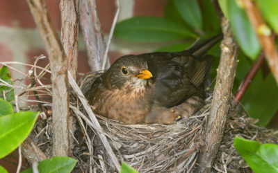 Further Thoughts on the Challenges of Nesting